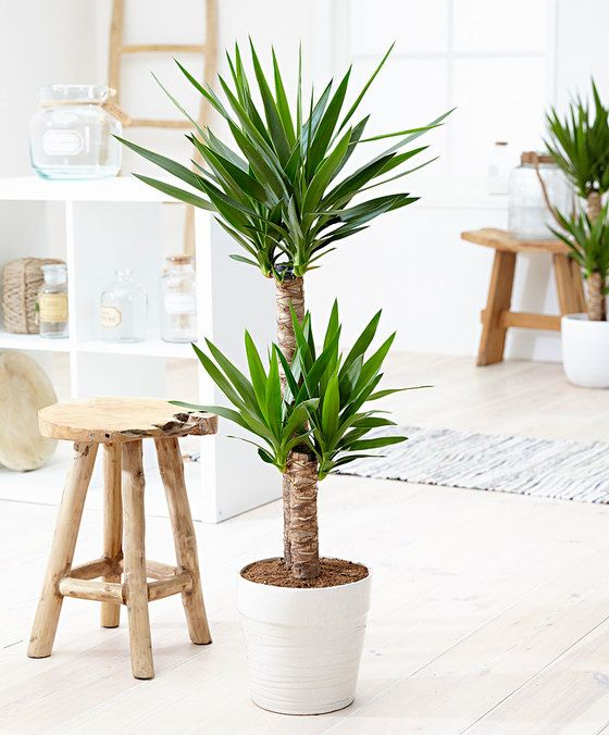 cultiver des plantes qui absorbent l humidit moving tahiti. Black Bedroom Furniture Sets. Home Design Ideas