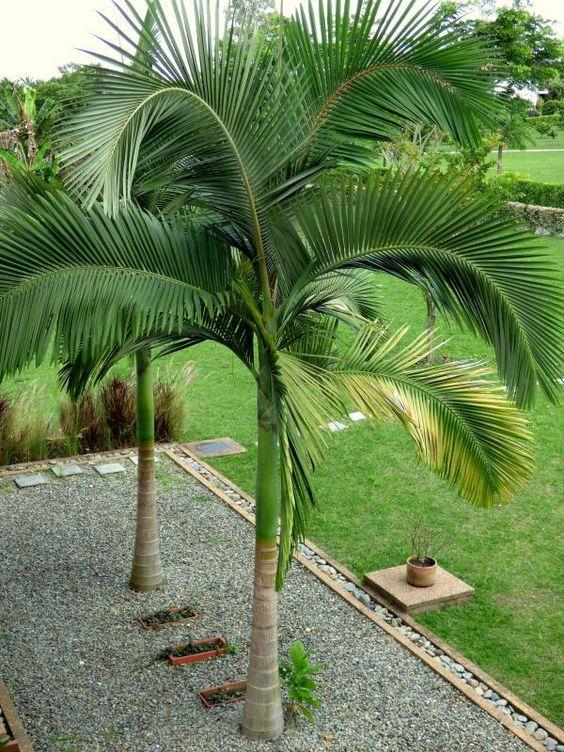 Comment tailler un palmier moving tahiti for Comment tailler un potiron